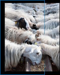 pienso ovejas - Betalia