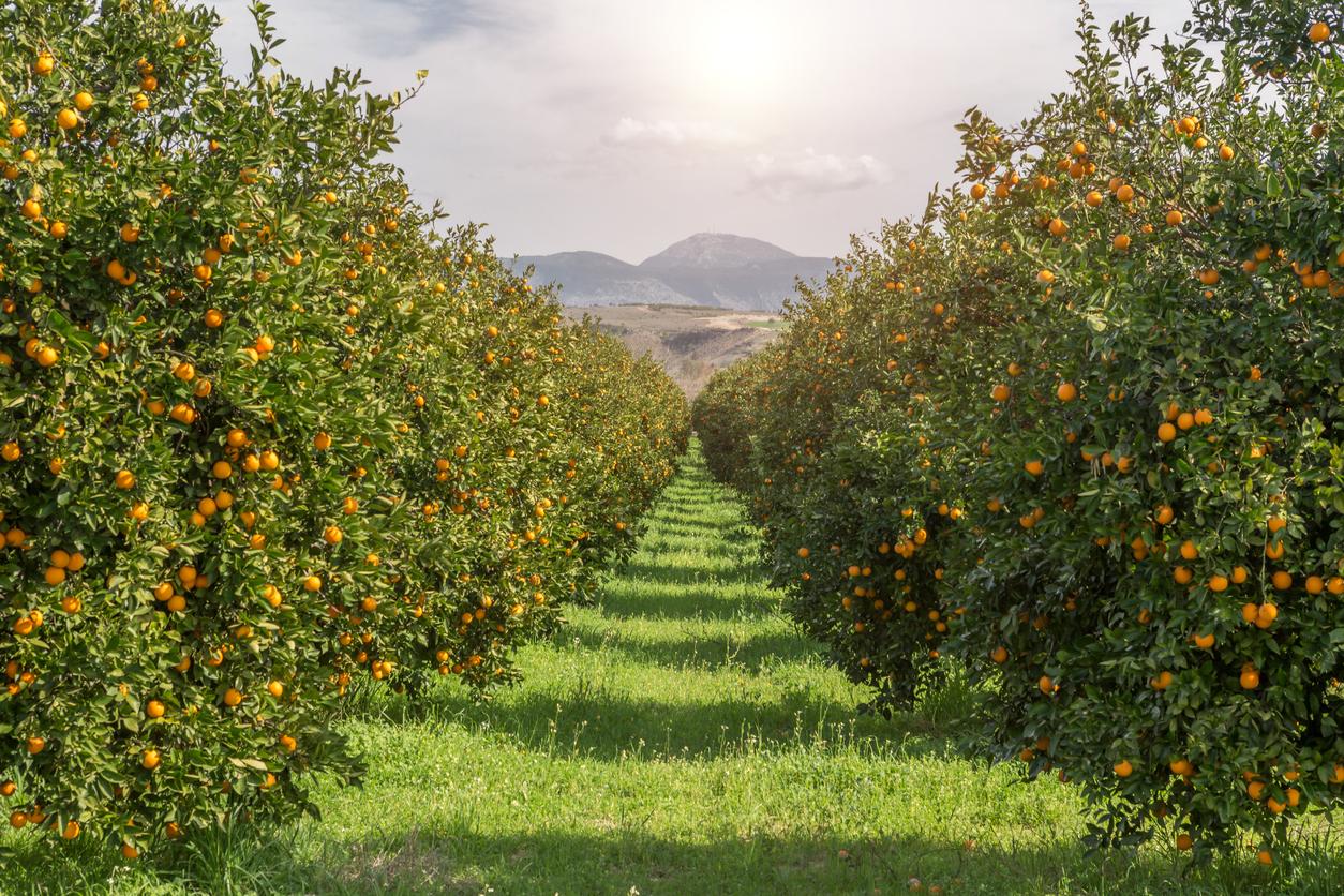 Stimel, el abono orgánico para conseguir cultivos más
