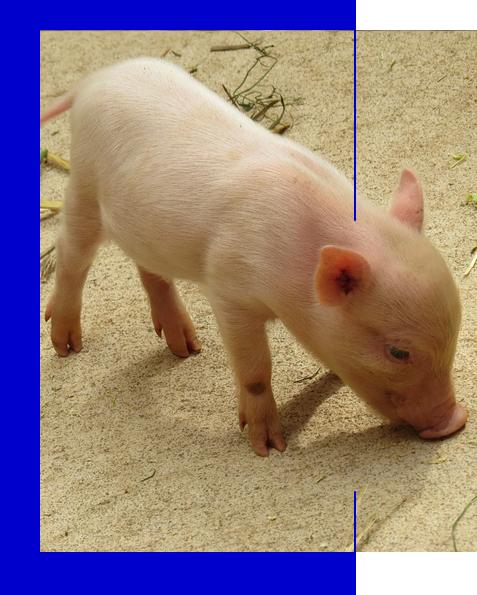 cerdo-lechal-fos-60