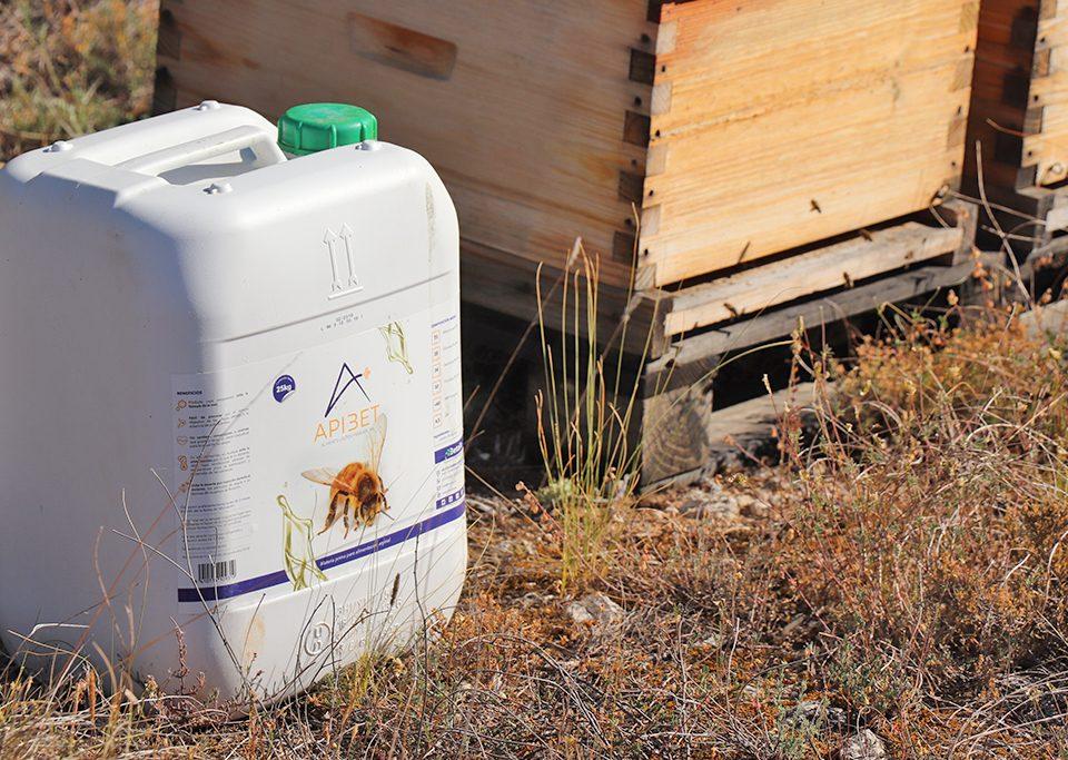 apibet-abejas-betalia
